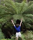 Pat Danna, Tasmanie